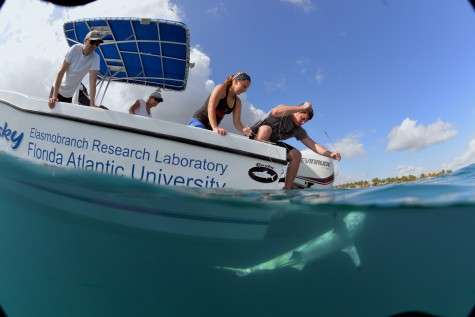 Animal rights group accuses FAU of the deaths of six sharks