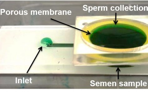 New device from FAU researchers aims to help fix sperm imperfections