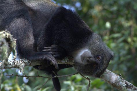 Researchers discover bat-eating monkeys