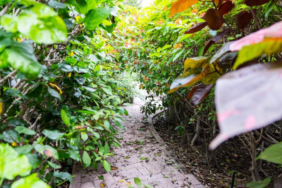 Overgrown plants taking over College of Nursing's garden. [Mohammed F Emran | Web Editor]