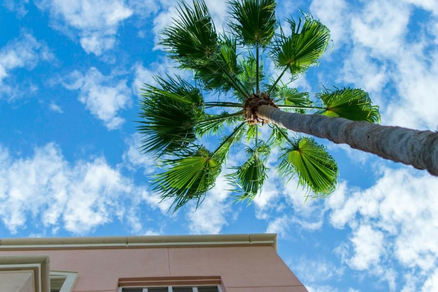 Sky above Mizner Park is always a beautiful view. Alexis Hayward | Web Assistant