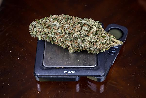 Following suit of Broward and Miami Dade counties, Palm Beach country has now decriminalized marijuana possession where people caught with under 20 grams will be subject to a $100 fine. Photo by Mohammed F. Emran   Asst. Creative Director