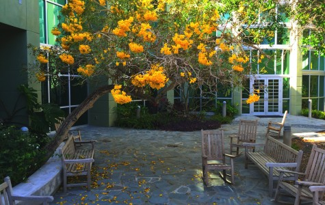 Ten campus study spots perfect for finals week