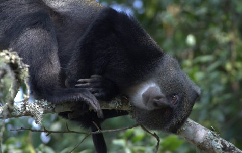 Researchers discover bat-eating monkeys