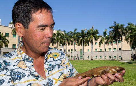 FAU biology professor Stephen Kajiura holds the recently identified shark. Photo courtesy of FAU News Desk