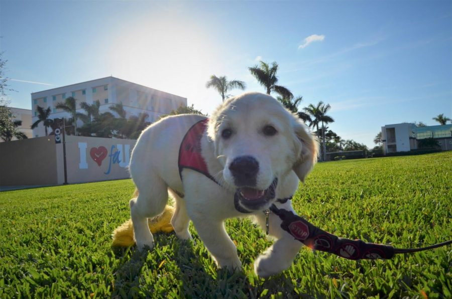 Photo of the Day: Service dog on Housing Lawn