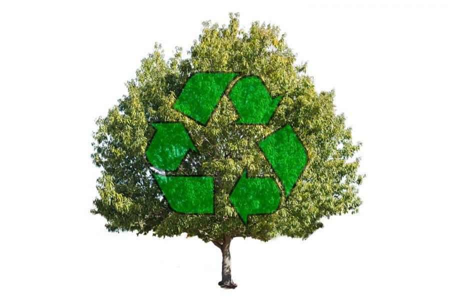 Comparing campus sustainability programs at Florida universities