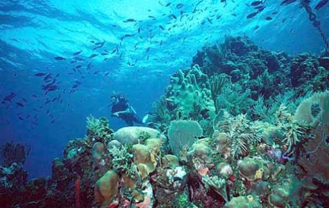 FAU researchers explore cure to cancer in coral reefs