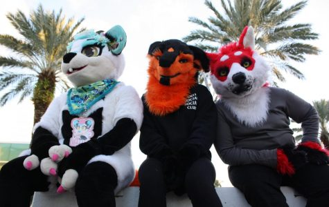 Furry Atlantic University: the furry community at FAU