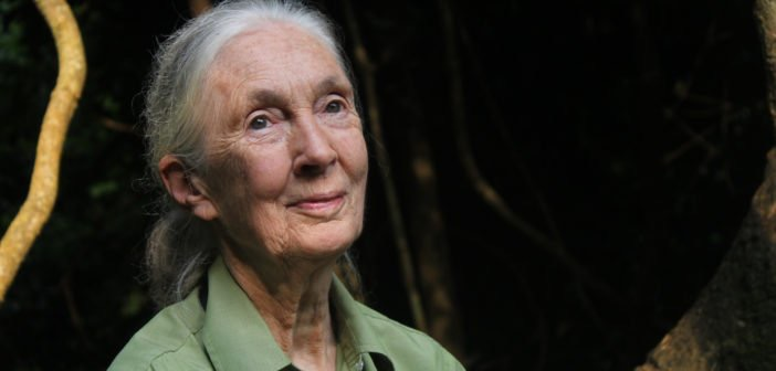 Dr.+Jane+Goodall+%E2%80%93%E2%80%93+courtesy+of+the+Jane+Goodall+Institute+website